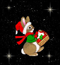 MY little Rabbit   :)